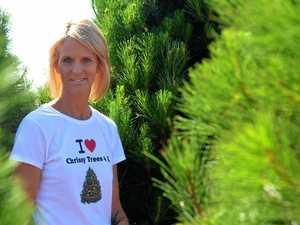 Christmas tree farm ready for the festive season