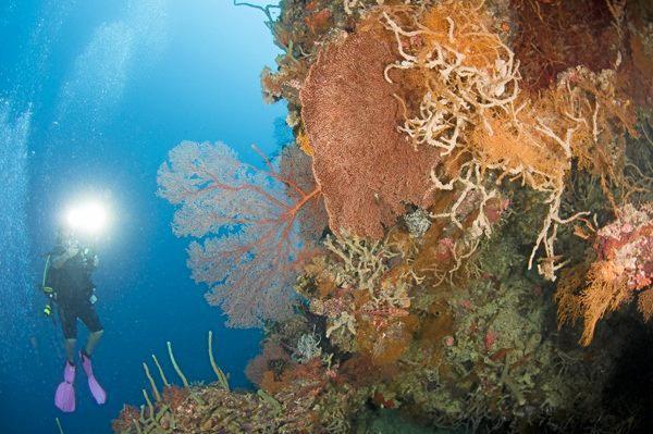 A diver.