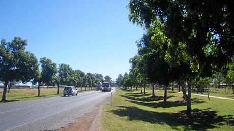 African Mahogany street trees in Moranbah.