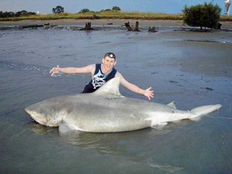 A giant bull shark caught in the Brisbane River by Terry Hessey.