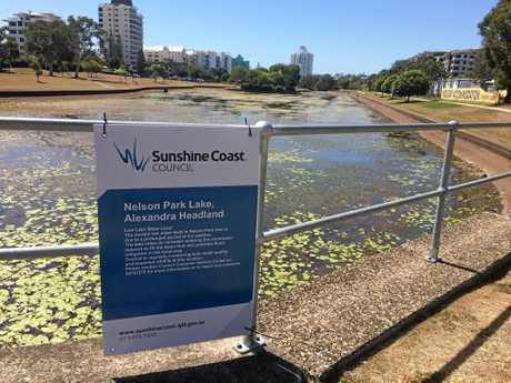 Dead fish have been surfacing at Alex duck ponds.