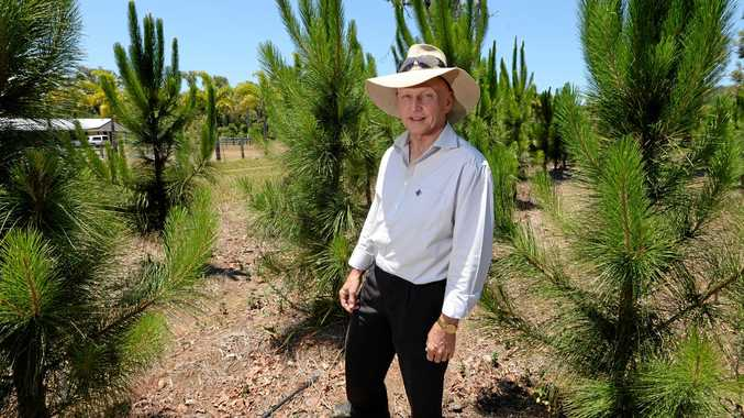 Gary Chalk among his Christmas Tree crop now ready to be sold.