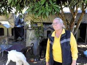 Happy Paws animal cruelty case adjourned