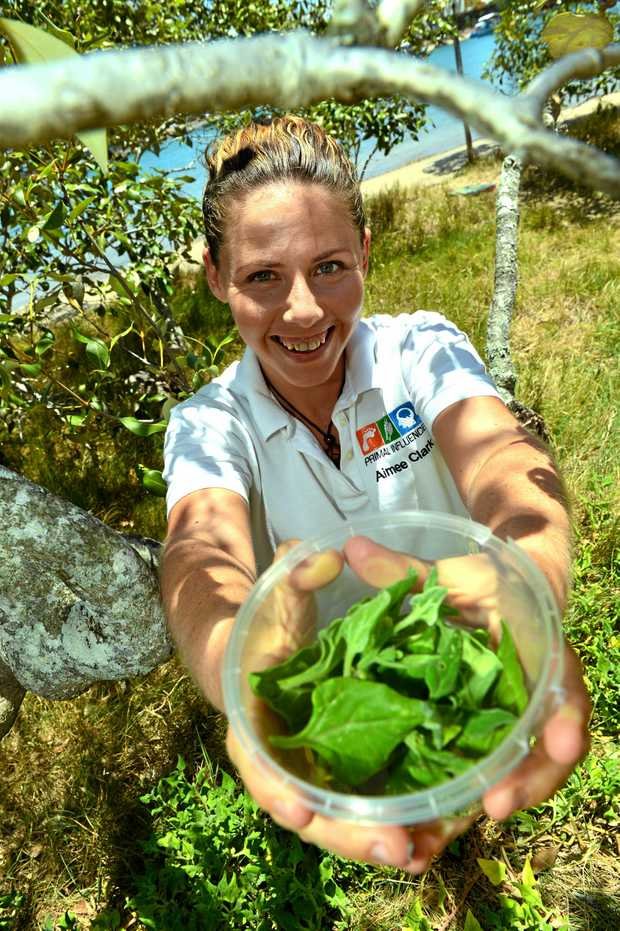Amiee Clark forages on Chambers Island and finds some native spinach (warrigal greens).