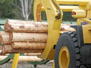 Timber industry could get policy boost