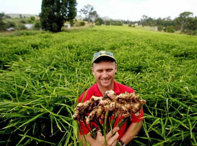 SHAREHOLDERS DECIDE: Templeton Ginger owner Shane Templeton is among shareholders who will decide Buderim Ginger's fate this month.