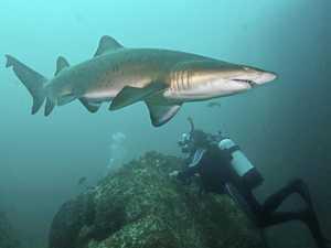 In deep: Wolf Rock's inhabitants have plenty of bite