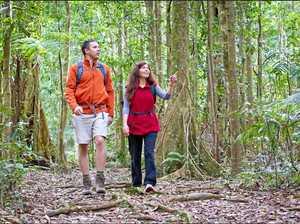 Orara Forest a major tourist drawcard