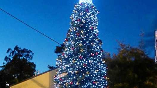 Kyogle's Christmas tree 2016.