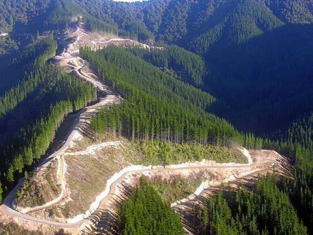 Australia's Blenheim Estate has bought 4973ha of forestry property in the Marlborough region of New Zealand.