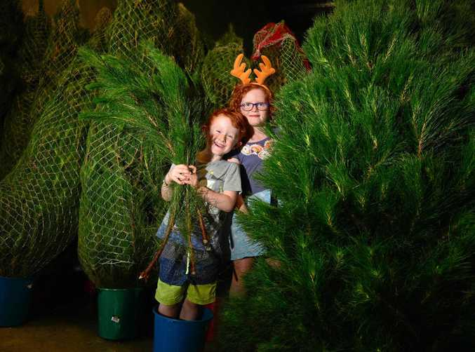 Sunny and Rubinka Molhanec amongst the real Christmas trees sold by Merry Xmas Trees in Marcoola.