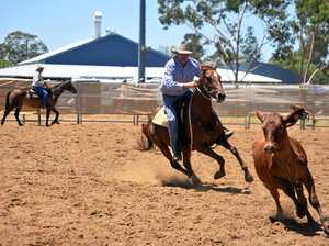 Dalby campdraft brings the best in the business