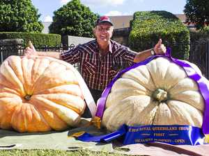 Whopper of a pumpkin: Giant vegetable weighs 202kg
