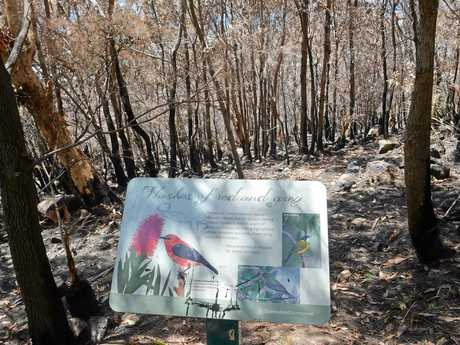 A sign depicting some of the birds common on Mt Coolum survived the fire.