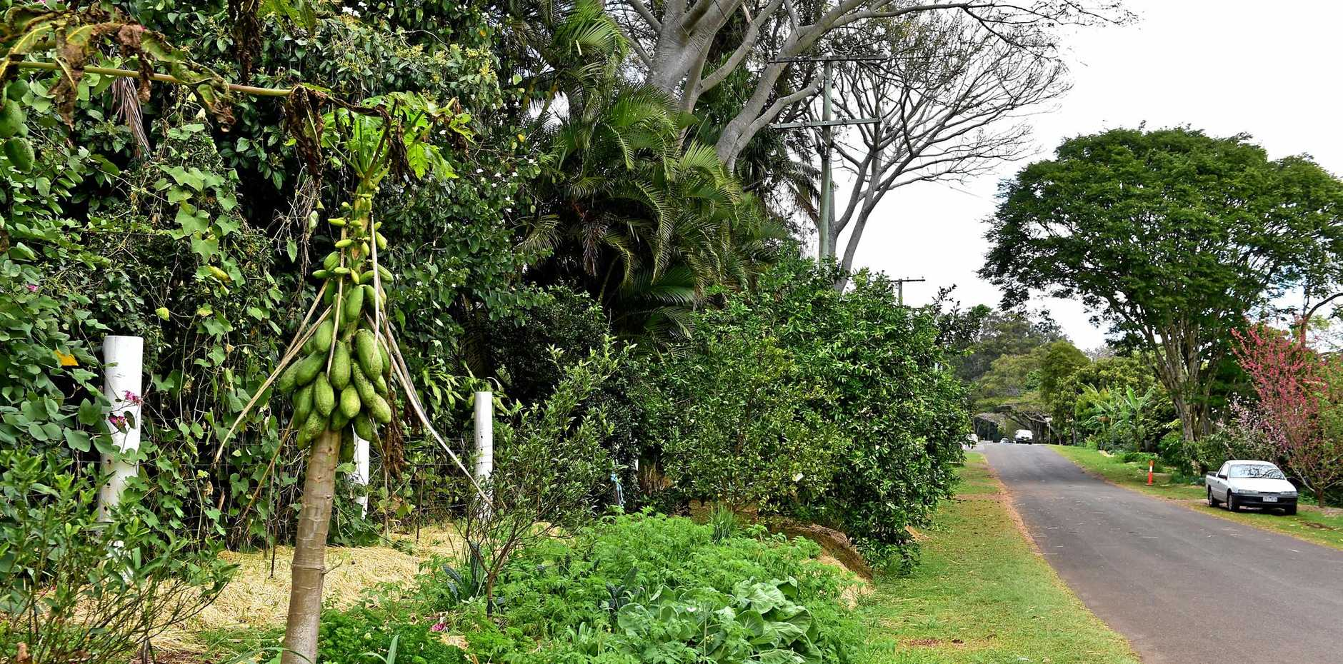Good morning Buderim. Food Street in Buderim is fantastic place to see what can be created with neighbourhood sidewalks, land is used to grow edible produce that is shared. More can be found online at - https://www.facebook.com/urbanfoodstreet -  Photo: Che Chapman / Sunshine Coast Daily