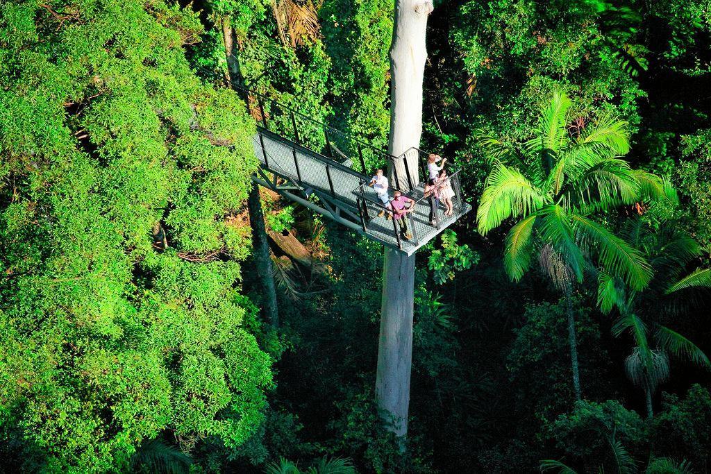 Mt Tamborine Rainforest Skywalk.