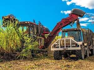 Curfew set to 'cripple' last of sugar cane harvesting