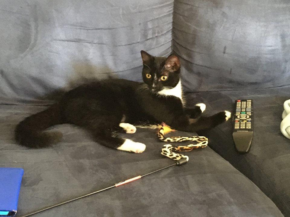 Lillian the cat.