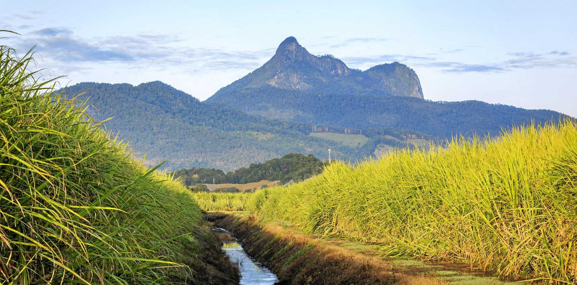 Our sleeping giant: Mt Warning overlooking the cane fields of the Tweed.