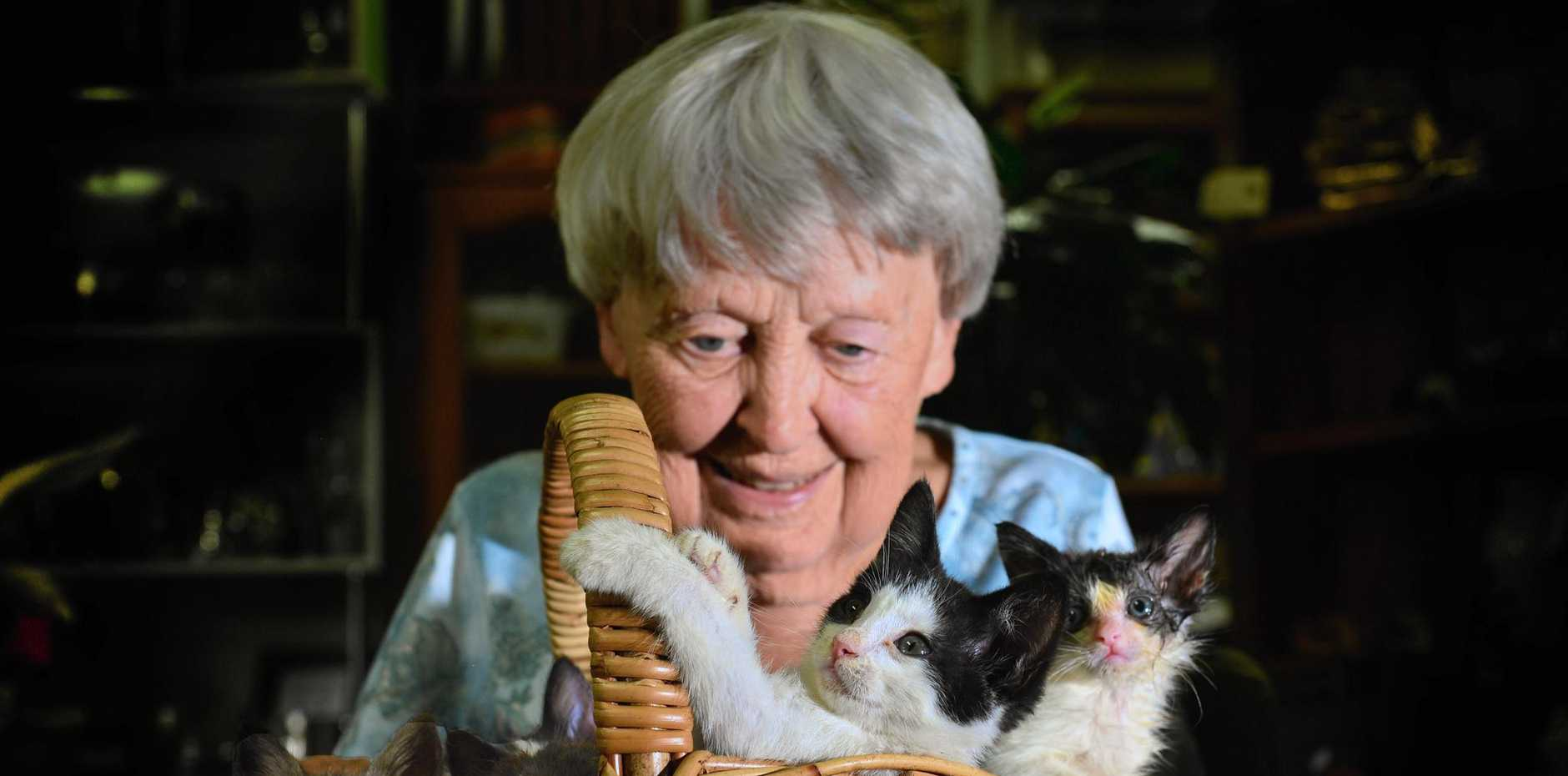 WAITING FOR A HOME: Some of the 80 kittens dumped at Gympie have been taken in by Down Memory Lane op-shop in Buderim and Billie Crundall helps look after them while they are waiting for new homes.
