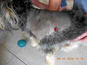 Do you know the dogs that savaged this pet?