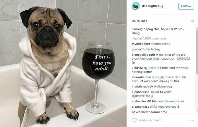 Doug the Pug is perhaps one of the most well-known dogs of Insta.