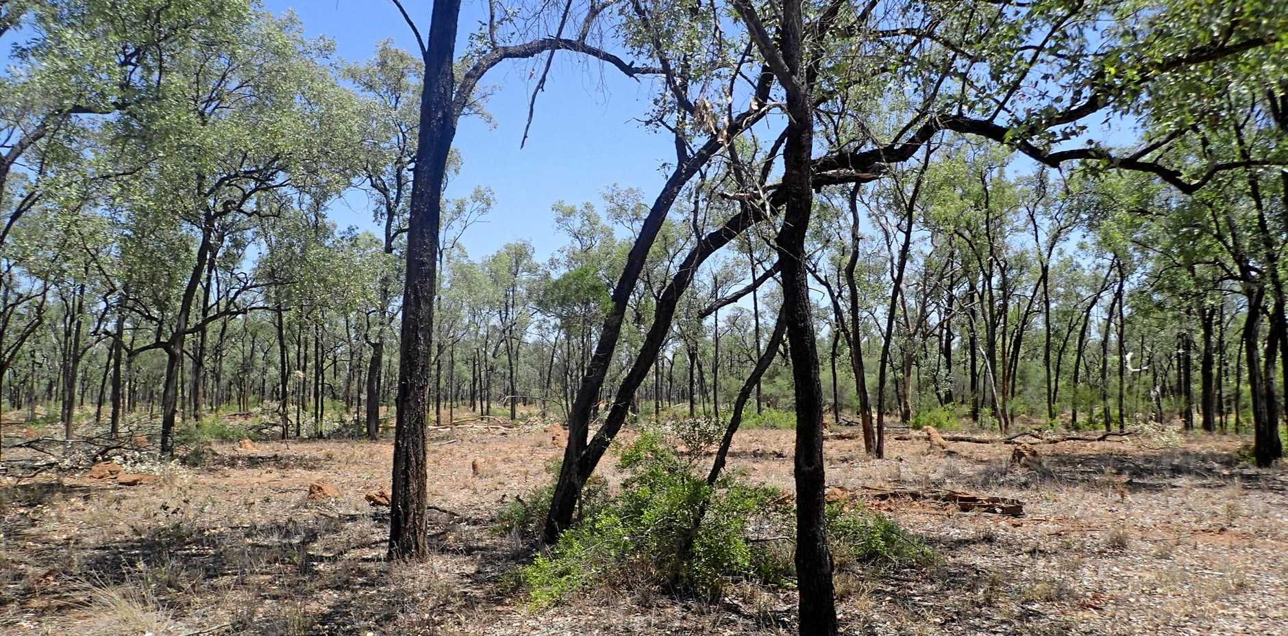 UNAUTHORISED VEGETATION CLEARING: Regulated remnant vegetation which consists of a silver-leaf ironbark woodland.