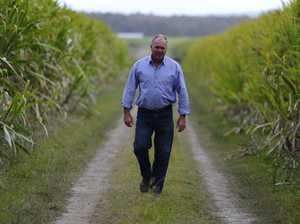 Cane harvest 'best in years'