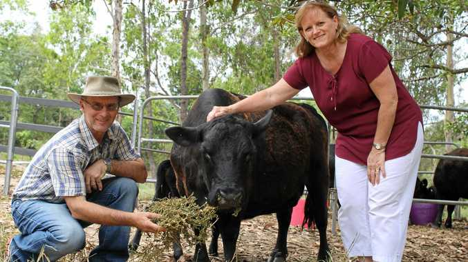FRESH START: Paul and Sandy Burnell from Mackay in Queensland have started a hobby farm. They have five lowline cattle in their small property and have just welcomed a new bull calf.