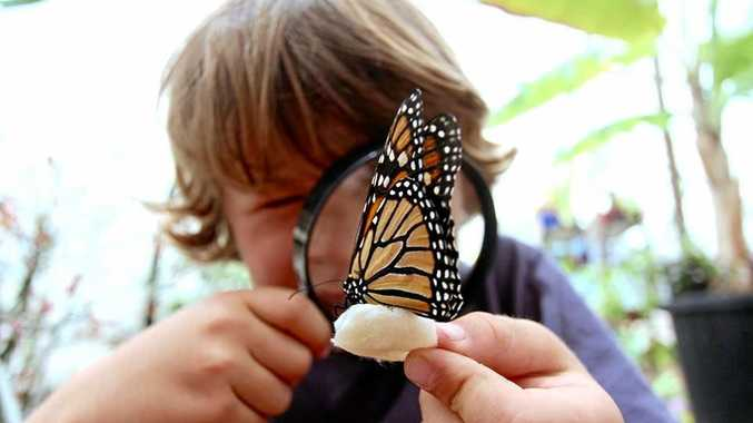 A child discovers the intricacy of a butterfly during the Green Heroes education program.