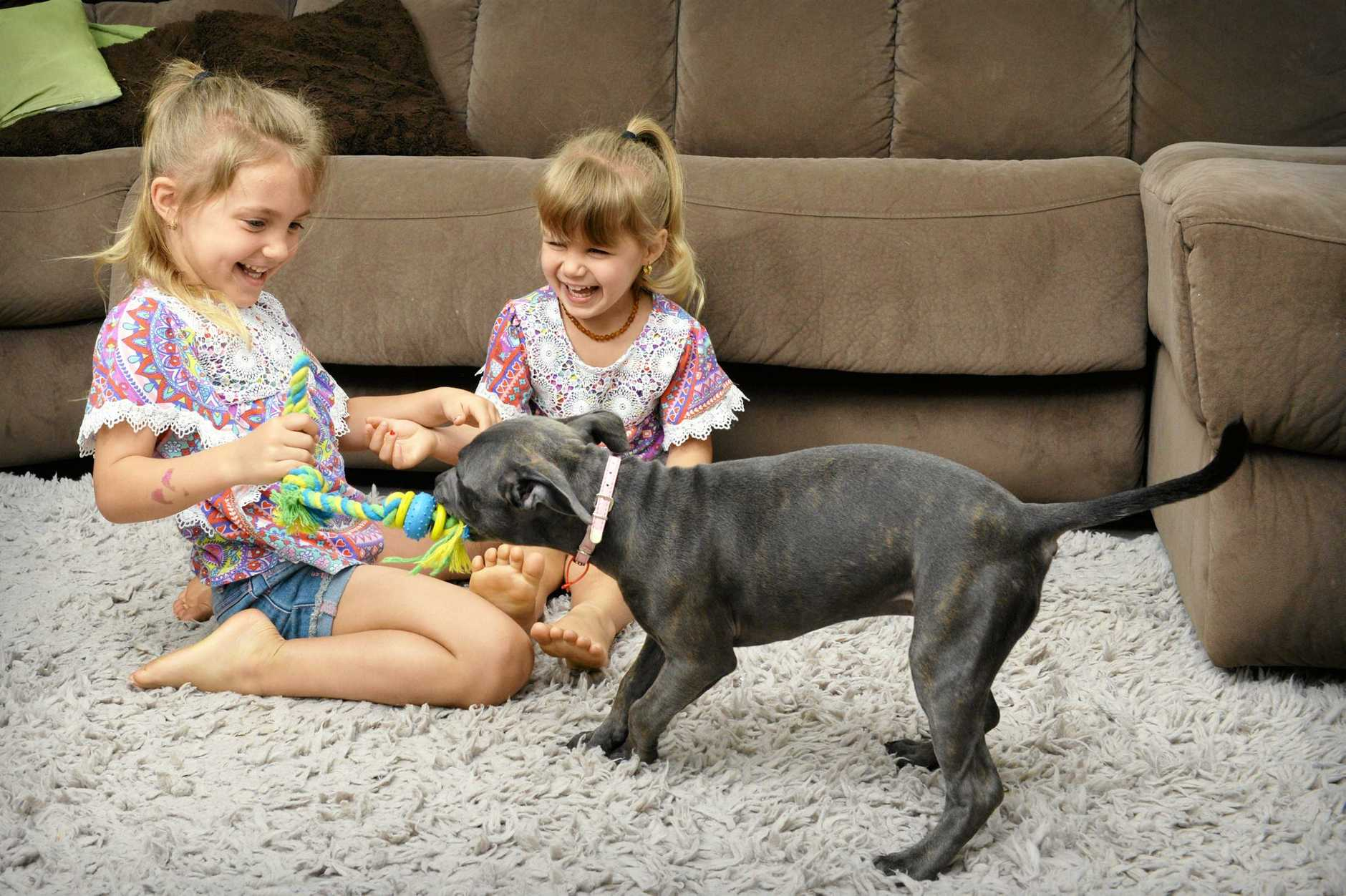 PLAY TIME AGAIN: Bailey-Noela Smith, 5 and Taylor Smith, 3, are delighted to have their beloved pet back for Christmas.