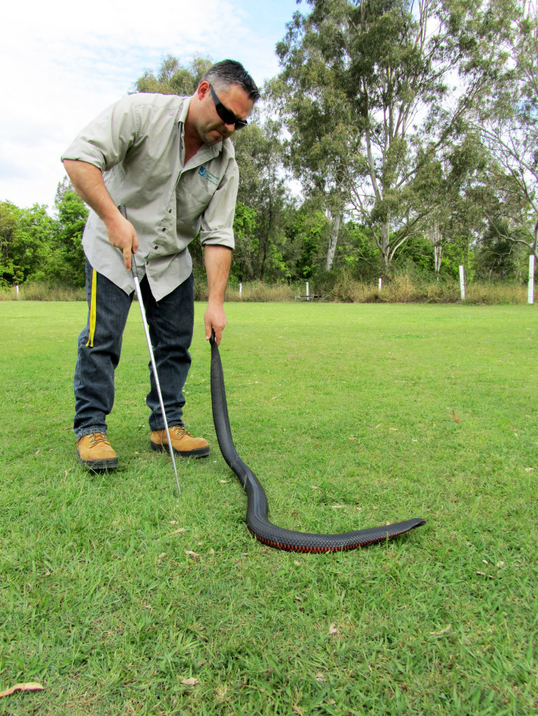 Bryan Robinson with a red-bellied black snake. Photo: Contributed