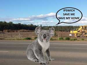 Land clearing: Hundreds sign petition to 'save koalas'