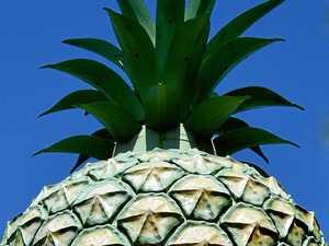 The Big Pineapple.