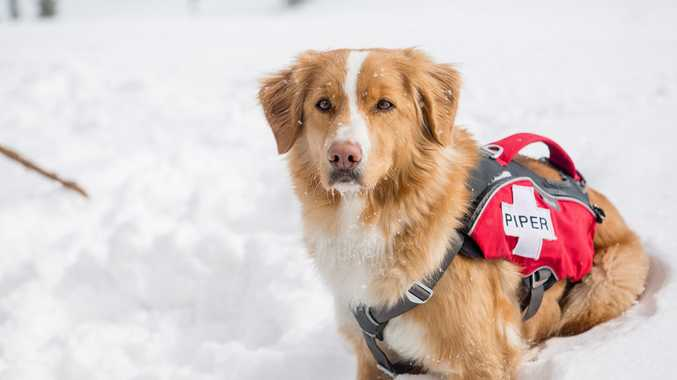 An avalanche rescue dog in a scene from the TV series Dogs: The Untold Story.