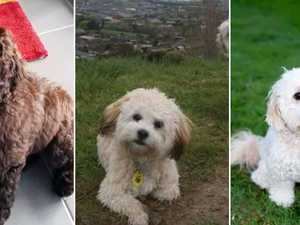 Thieves steal car with three family dogs inside
