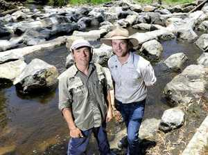 Fish ladder helping fish numbers in Bremer