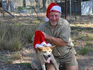 Why you should adopt a dingo