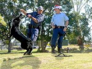 Police pooch helps spread tough-love Christmas message