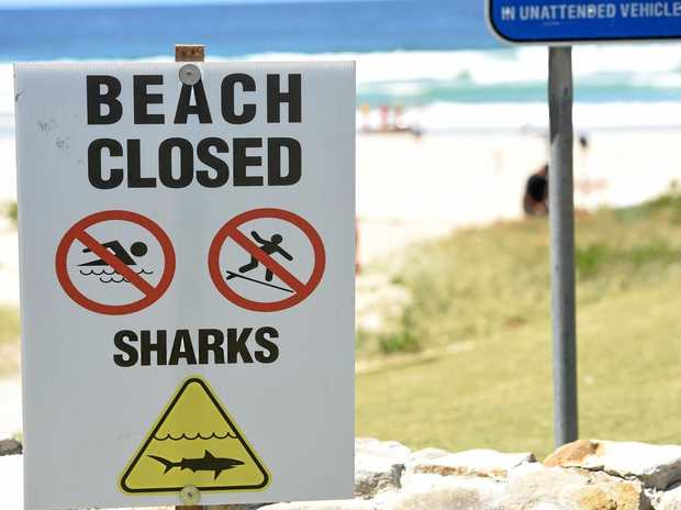 Advice to prevent a shark attack this summer.