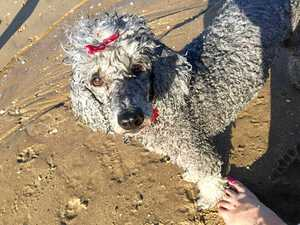 Readers appalled at dog owner's actions after attack at beach