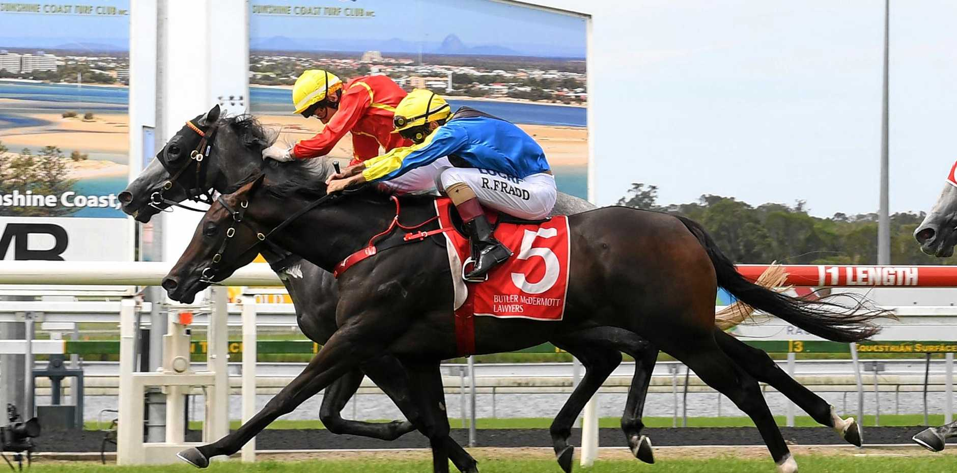 JUST: Jeff Lloyd steers Sweet Shamrock to a narrow victory in the first at Corbould Park on Wednesday.