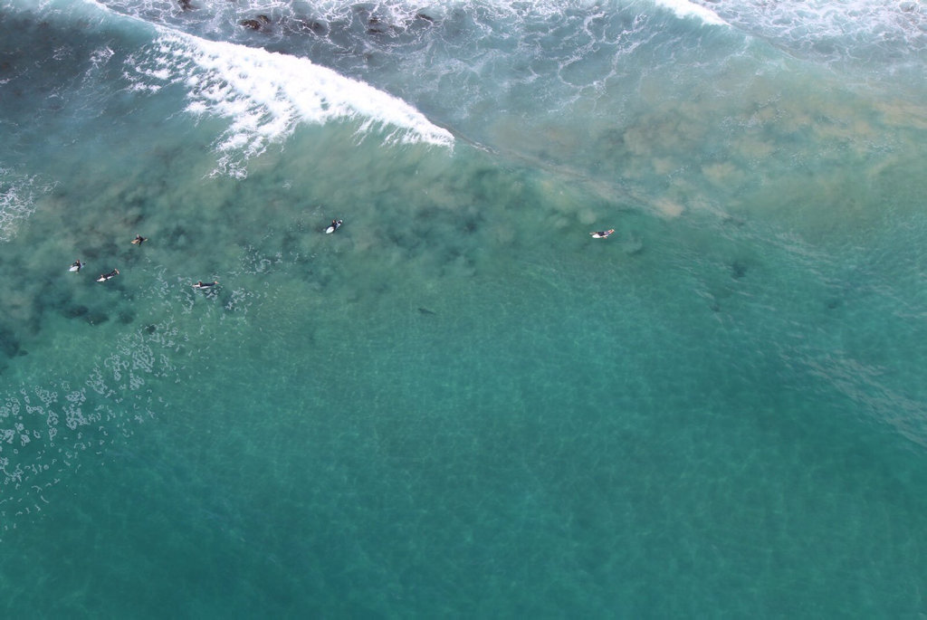 A photo of a shark at Boulder Beach, Skennars Head.