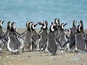 TRAVEL: Human-like penguis are a joy to watch