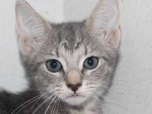 RSPCA kittens available to adopt