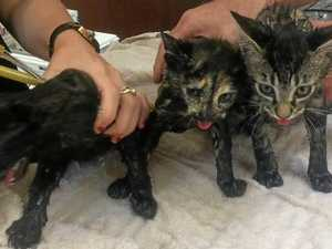 Abandoned kittens found in bag 15 minutes from death