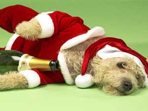 What not to give your pet this Christmas