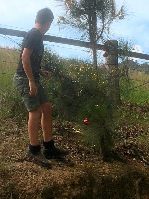 An anonymous source captured proof of what looks like a ten-year-old boy decorating a public tree in Mooball without authorisation.