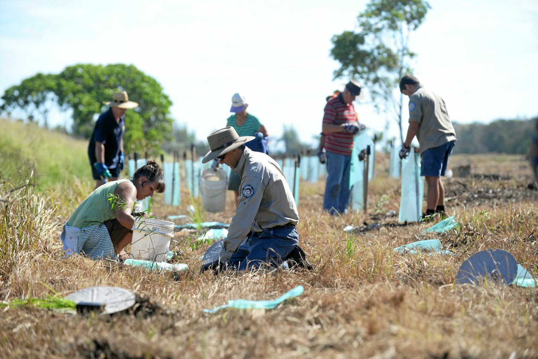 TURTLE CONSERVATION: Turtle volunteer Naomi Santin and QPWS ranger Shane O'Connor plant melaleuca trees at Mon Repos on World Turtle Day.