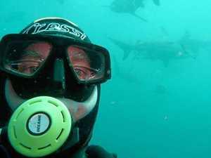 Shark sightings clear Coast beach